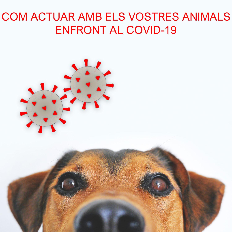 Com actuar amb els vostres animals enfront el COVID-19.